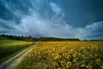 15 Tips for Better Landscape Photos