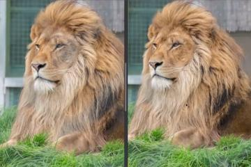 How to Remove Fence Lines from Zoo Photos