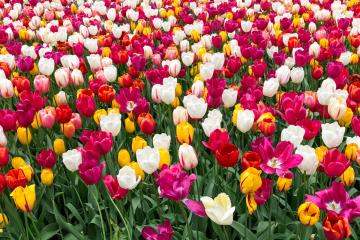 6 Floral Background Photos